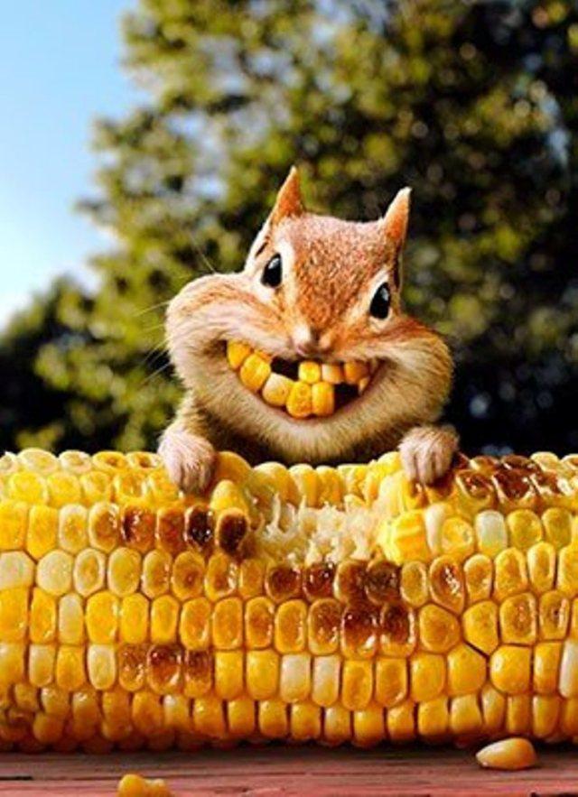 say cheese!!!!!!
